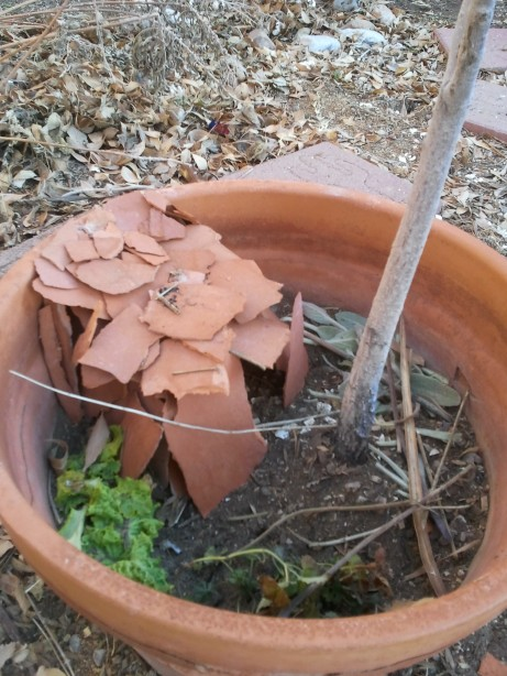 Fairy House in a Pot