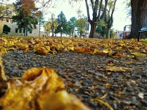 Gold on the ground