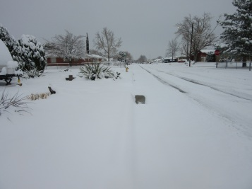 The street before anyone marred the white.