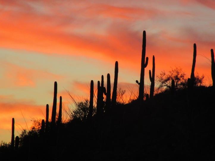 Sky Island Scenic Byway - Mt Lemmon, Tucson, AZ44