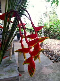 Droopy Birds of Paradise